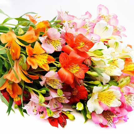 Mix of Alstroemerias (by an item) - order with delivery