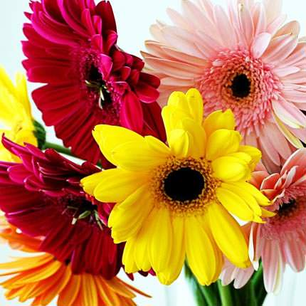 Mix of Gerberas (by an item) - delivery in Ukraine