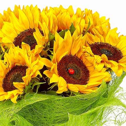 11 bright sunflowers - delivery in Ukraine