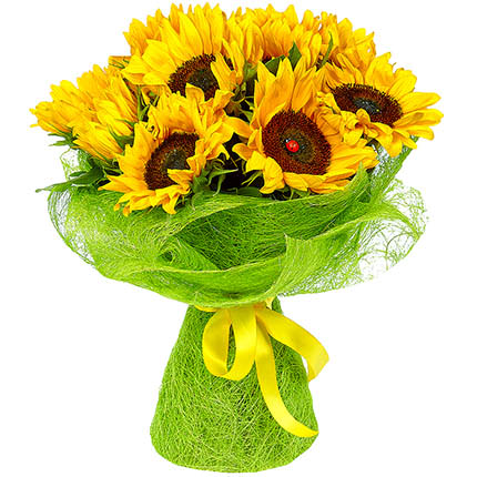 11 bright sunflowers - order with delivery