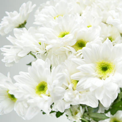 51 white chrysanthemums - delivery in Ukraine
