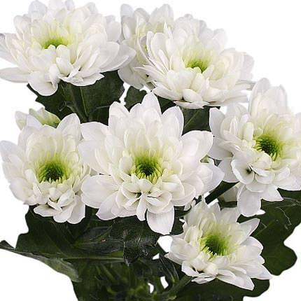 51 белая хризантема - заказать с доставкой