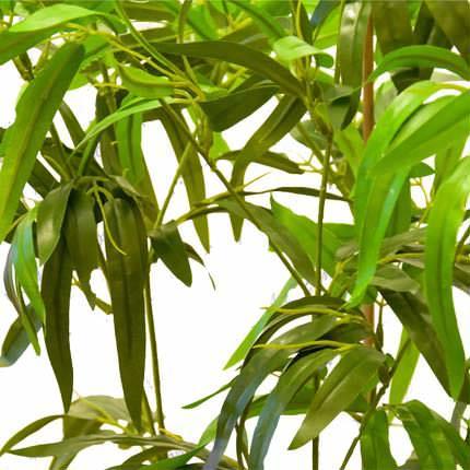 """Комнатное растение """"Бамбук"""" (обыкновенный, штамбовой) - заказать с доставкой"""
