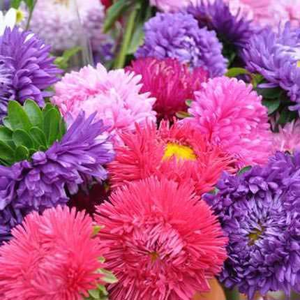"""Bouquet in a pot """"Autumn Garden"""" - delivery in Ukraine"""