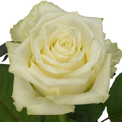 """Квіти в коробці """"Моїй красунечці"""" - замовити з доставкою"""
