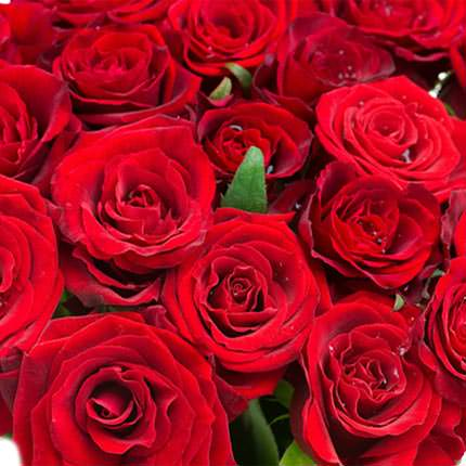 "Bouquet in a pot ""21 scarlet roses"" - delivery in Ukraine"