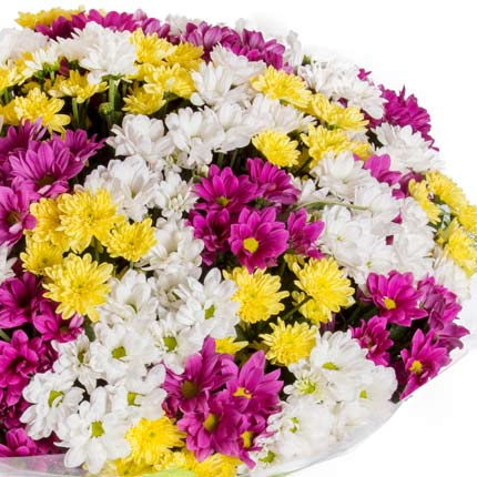 51 multicolored chrysanthemums - delivery in Ukraine