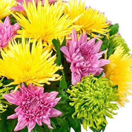 19 разноцветных хризантем - доставка по Украине