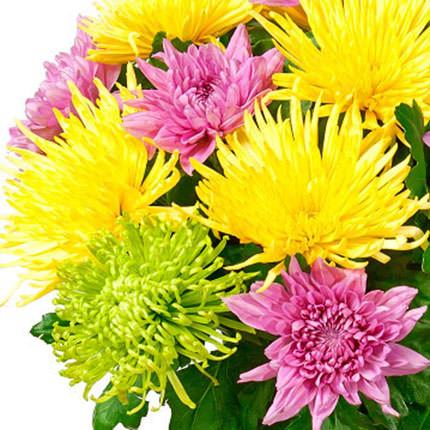 19 різнокольорових хризантем - замовити з доставкою