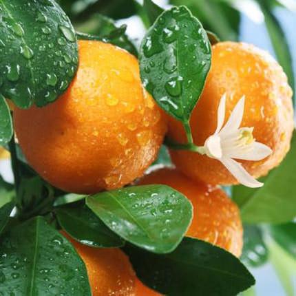 """Корзина фруктов """"Сладкие мандаринки"""" - заказать с доставкой"""