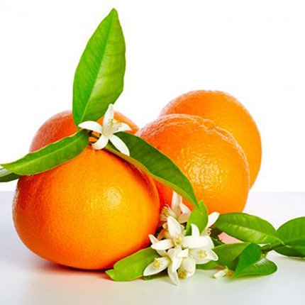 "Houseplant ""Calamondin-Citrus"" (mini-bole) - order with delivery"