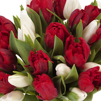 29 red and white tulips - delivery in Ukraine