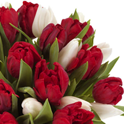 29 red and white tulips - order with delivery