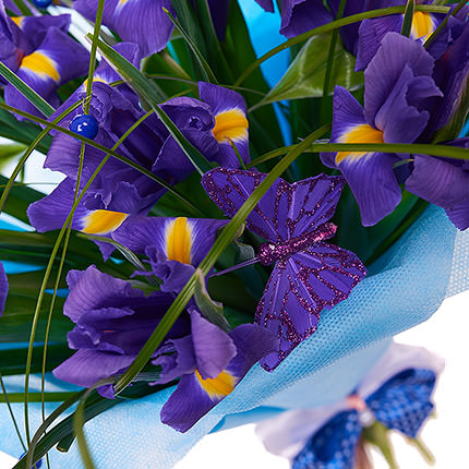 11 purple irises - order with delivery