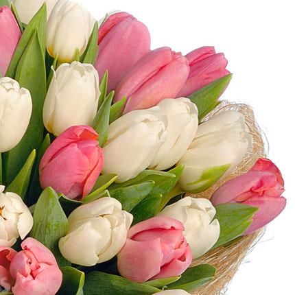 51 белый и розовый тюльпан - доставка по Украине