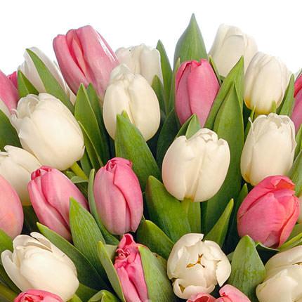 51 белый и розовый тюльпан - заказать с доставкой