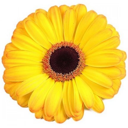 "Bouquet ""Sunny"" - order with delivery"