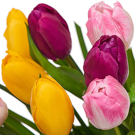 11 different color tulips - order with delivery