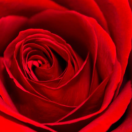 """Цветы в коробке """"I Love You"""" - заказать с доставкой"""