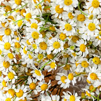 """Bouquet """"The field daisies"""" - order with delivery"""