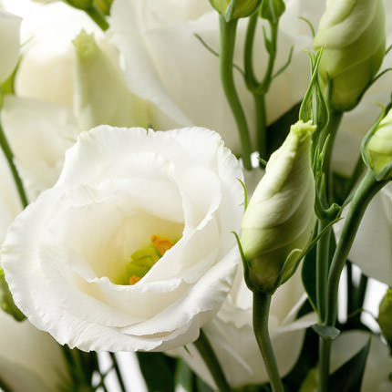 """Delicate bouquet """"Only mine"""" - order with delivery"""