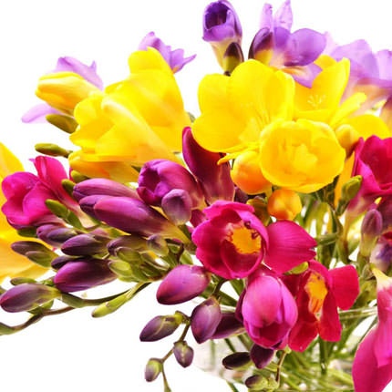 Basket of colorful freesias - order with delivery