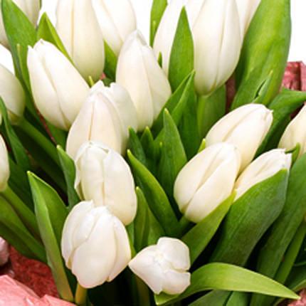 21 white tulip - delivery in Ukraine