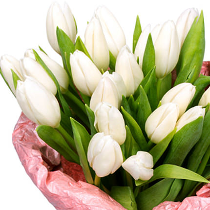 21 white tulip - order with delivery