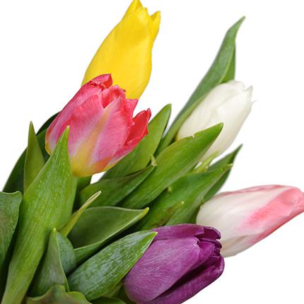 5 разноцветных тюльпанов - заказать с доставкой