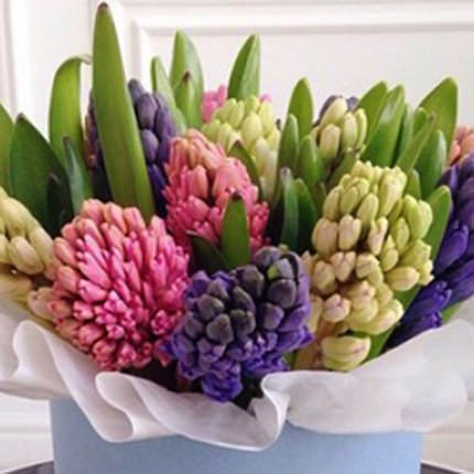 "Flowers in a box ""15 delicate hyacinths"" - delivery in Ukraine"