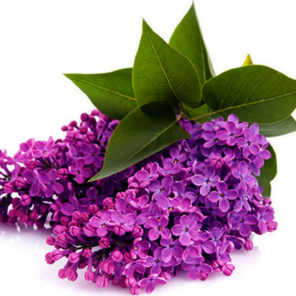 "Basket ""Aromatic lilac"" - order with delivery"