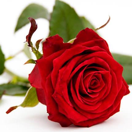 """Букет в конус-пакете """"15 красных роз"""" - доставка по Украине"""