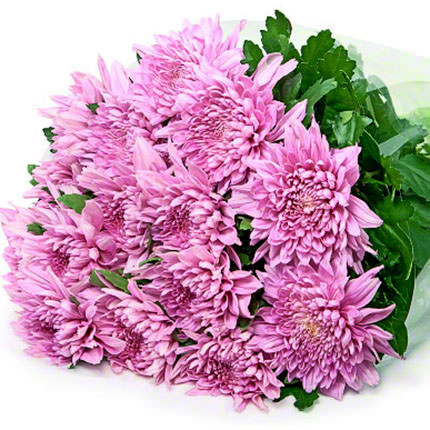 15 pink chrysanthemums - delivery in Ukraine