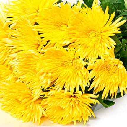 11 жовтих хризантем - доставка по Україні
