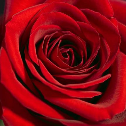 Букет з 21 троянди - замовити з доставкою