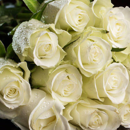 19 white roses - order with delivery
