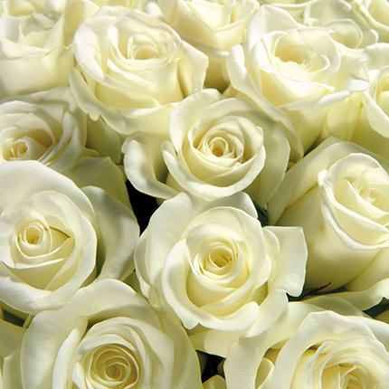 Bouquet of 7 white roses - delivery in Ukraine