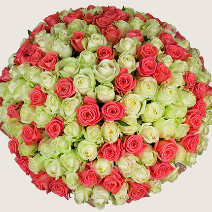 251 white and pink rose - order with delivery
