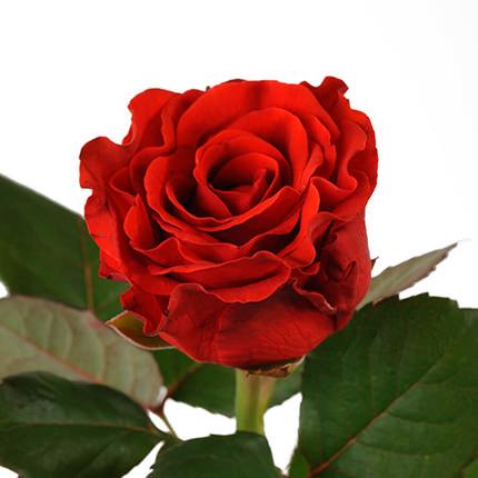 """Букет """"51 красная роза Эль Торо"""" - заказать с доставкой"""
