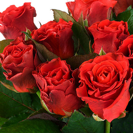 "Bouquet ""101 red roses El Toro"" - order with delivery"