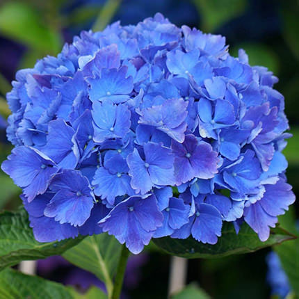 """Stylish bouquet """"Blue Lagoon"""" - delivery in Ukraine"""