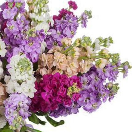 25 веток разноцветной маттиолы - заказать с доставкой