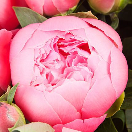 5 May peonies - order with delivery
