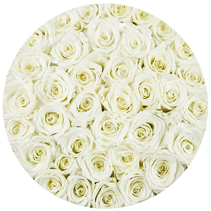 "Flowers in a box ""101 white roses"" - order with delivery"