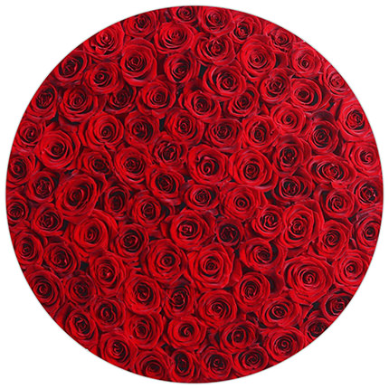 "Flowers in a white box ""151 red roses"" - order with delivery"