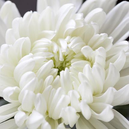 25 білих хризантем - замовити з доставкою