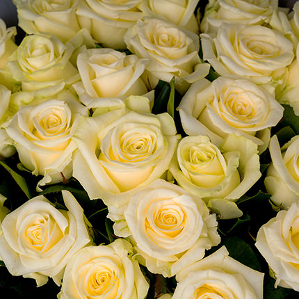 "Bouquet ""25 white roses"" - delivery in Ukraine"