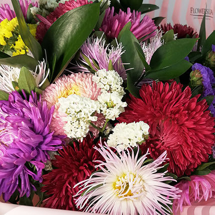 25 colorful asters - delivery in Ukraine
