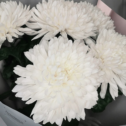 5 white chrysanthemums - delivery in Ukraine