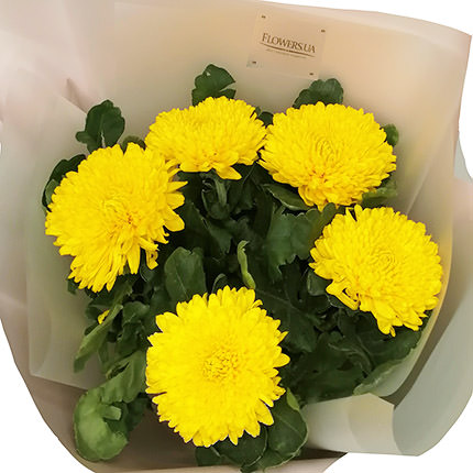 5 yellow chrysanthemums - delivery in Ukraine